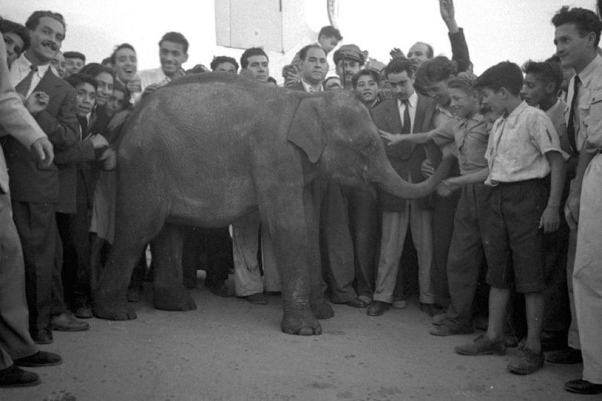 Recibimiento a la elefanta Fresia en el Zoológico de Santiago, año 1941. Foto:Fotos Históricas de Chile. Imagen Por: