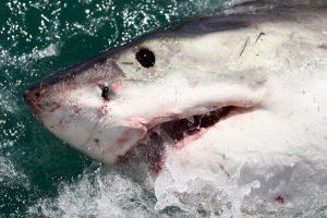 El hombre estaba nadando cuando se encontró con un tiburón de casi dos metros de largo. Foto:Getty Images. Imagen Por: