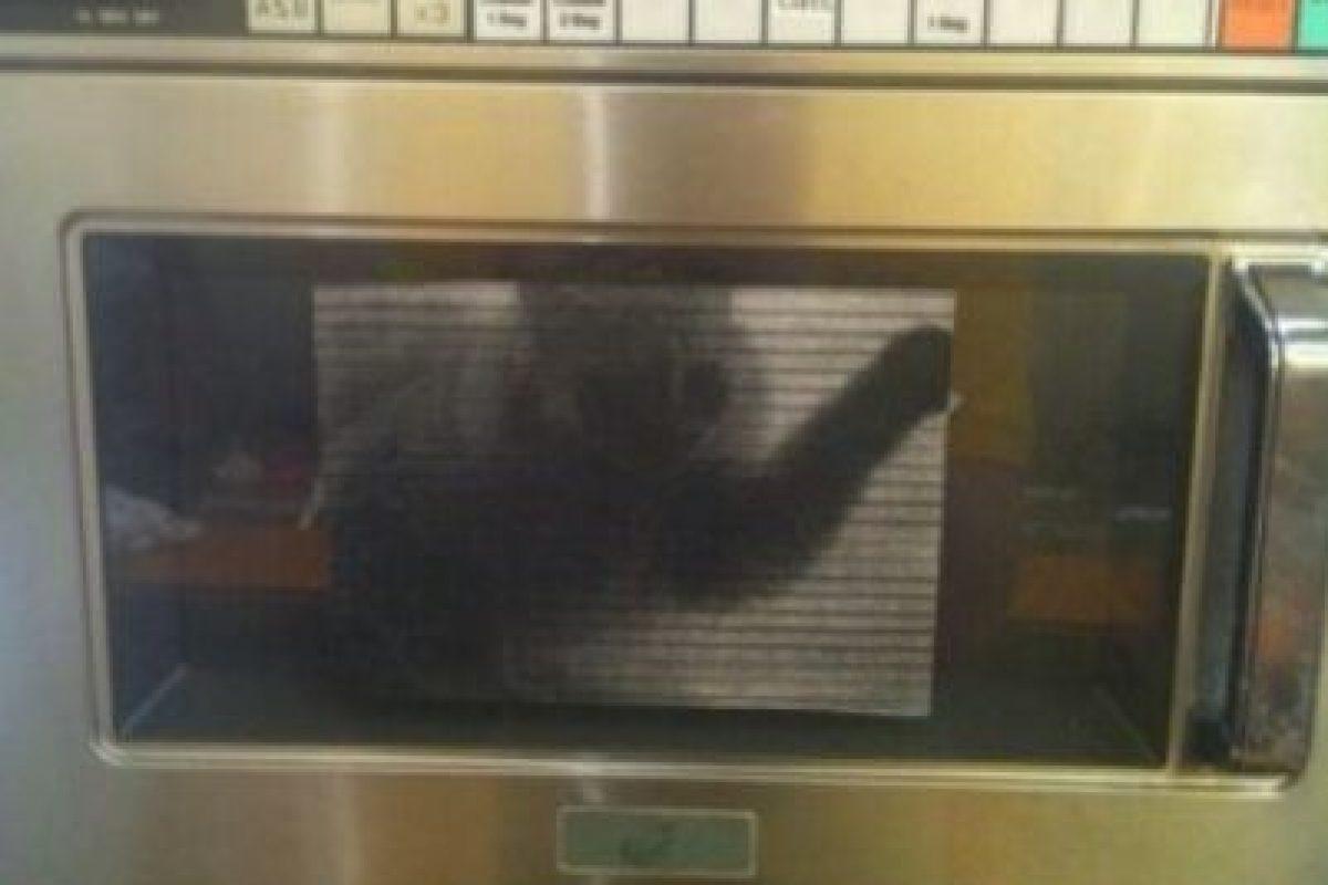 Foto de gato en el microondas. Foto:vía Prankked. Imagen Por:
