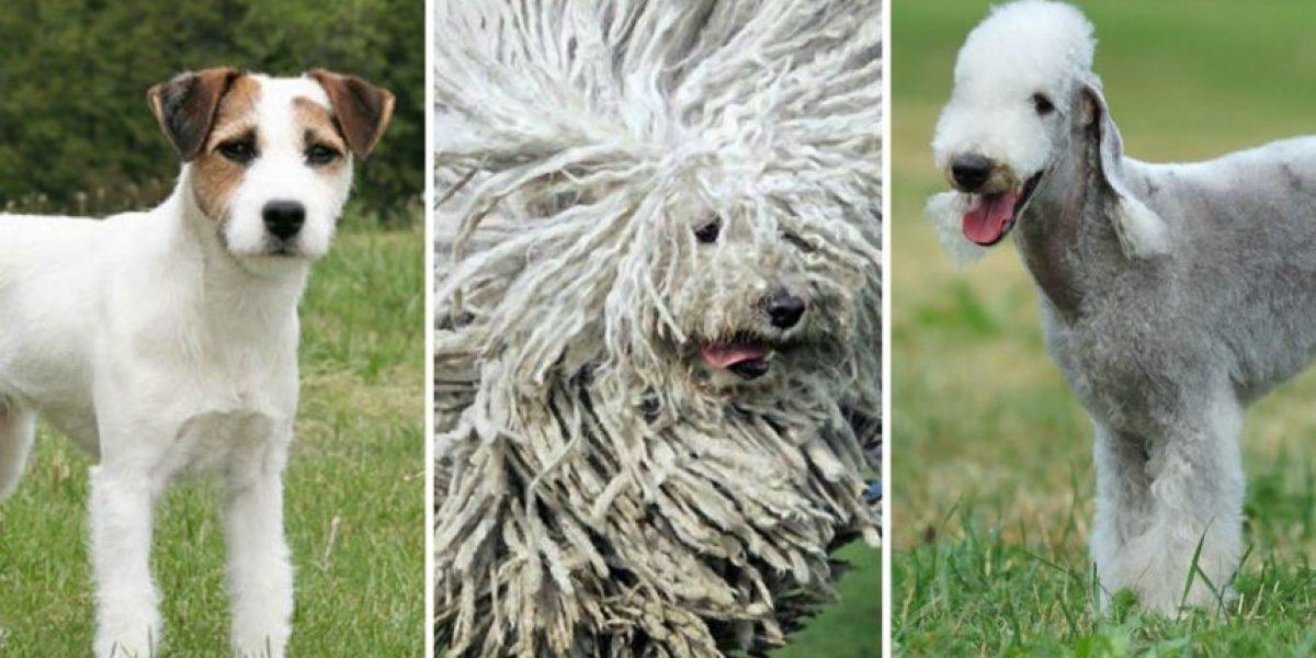 Estos son los perros más exclusivos y caros que existen en Chile