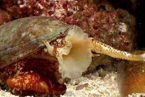 5. Los caracoles cónidos. Foto:Tumblr. Imagen Por: