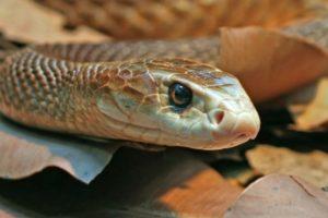 4. Serpiente taipán del interior. Foto:Tumblr. Imagen Por: