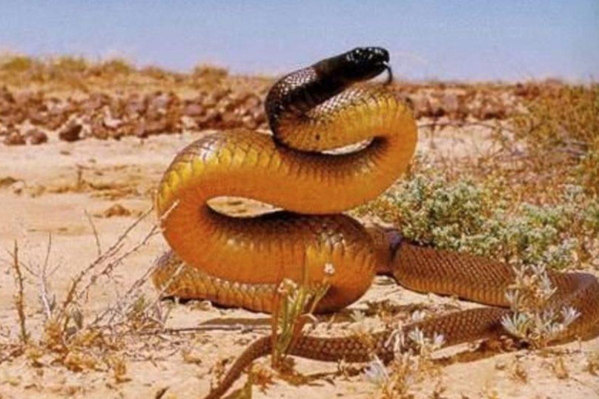 7. Serpiente marrón oriental Foto:Pinterest. Imagen Por: