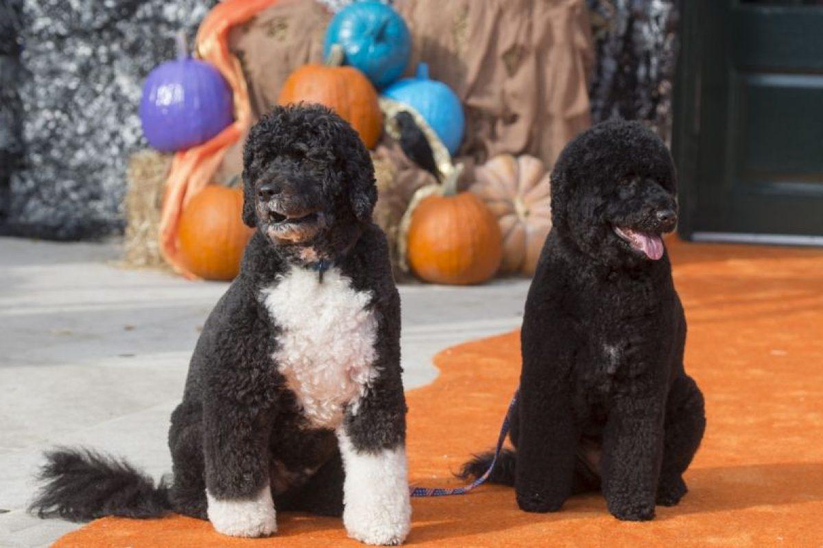 Sunny y Boo, los perros de la familia Obama Foto:AFP. Imagen Por: