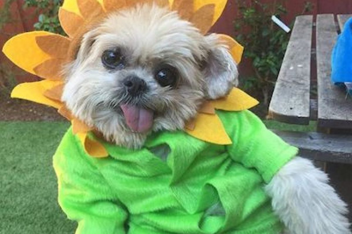 """""""Marnie The Dog"""", un perro celebridad de redes sociales. Foto:Instagram.com. Imagen Por:"""