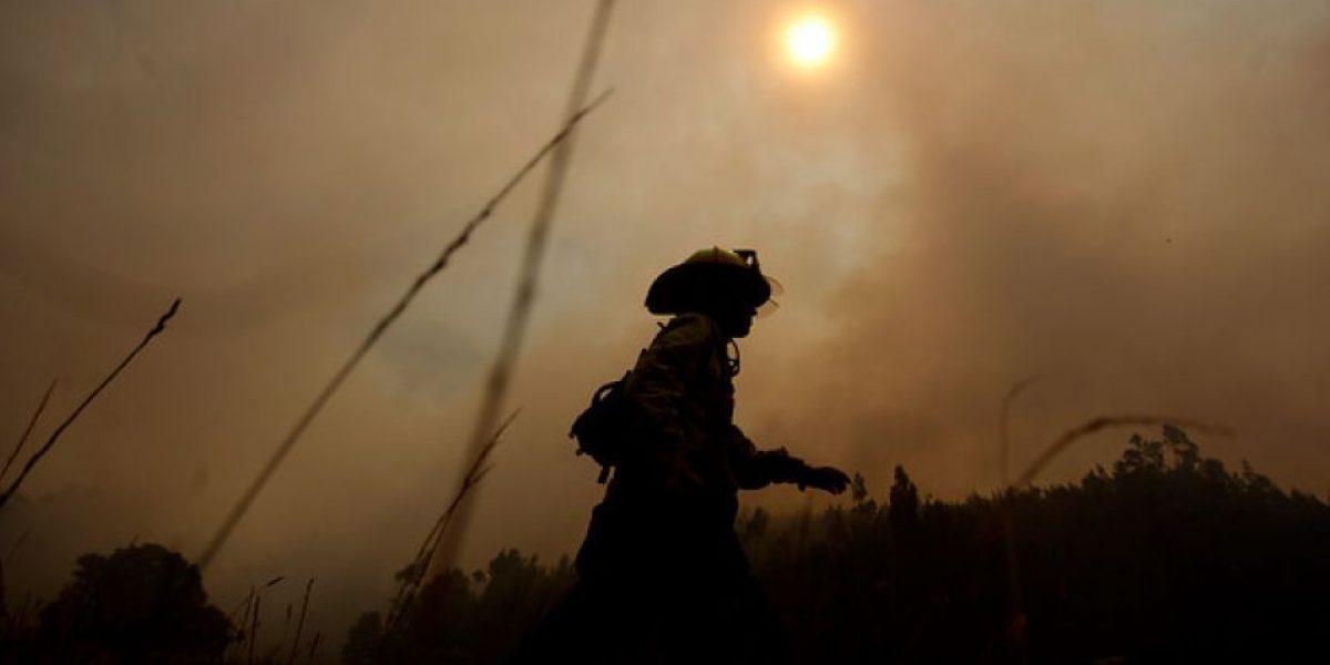 Declaran Alerta Roja para la comuna de Arauco por incendio forestal