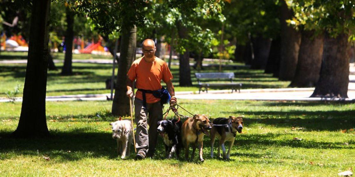 Conaf: reglamento impide ingreso de mascotas a parques nacionales