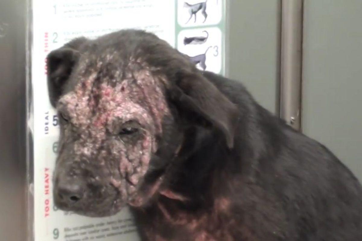 Su nombre es Krusty Kristy y se encontraba sin hogar cubierto de sarna. Foto:Vía Youtube. Imagen Por: