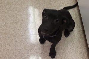 """El pequeño perro estaba programado para ser sacrificado. Sin embargo, la organización """"Vet Ranch"""" lo salvó. Foto:Vía Youtube. Imagen Por:"""