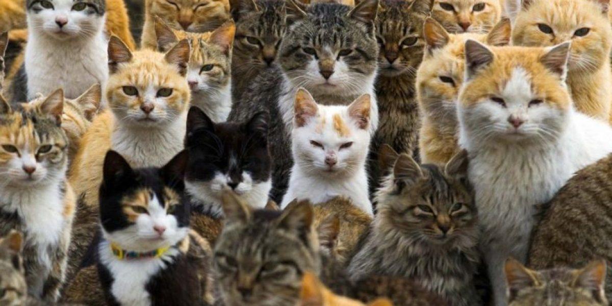 ¡No es broma! Israel quiere exiliar a miles de gatos callejeros