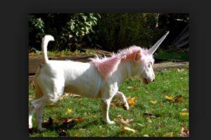 """No hay nada más extraño que ver a un """"unicornio"""" correr en la pradera. Foto:Tumblr.com/Tagged-costumes-pets. Imagen Por:"""