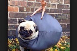 ¿Miley sobre el perro? Foto:Tumblr.com/Tagged-costumes-pets. Imagen Por: