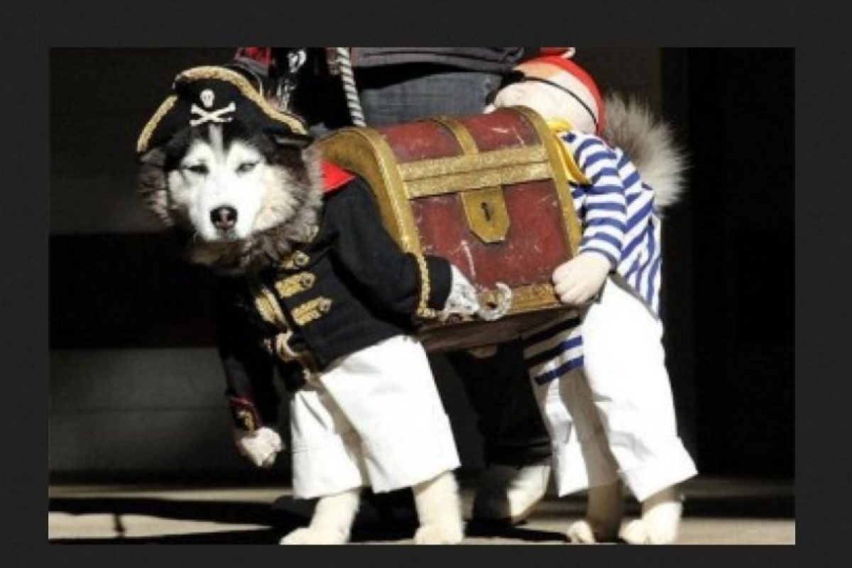 Pirata desconcertado… Foto:Reddit. Imagen Por: