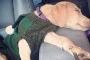Así llegó un día Lana al refugio Mighty Mutts, en Ontario. Foto:vía Mighty Mutts/Facebook. Imagen Por: