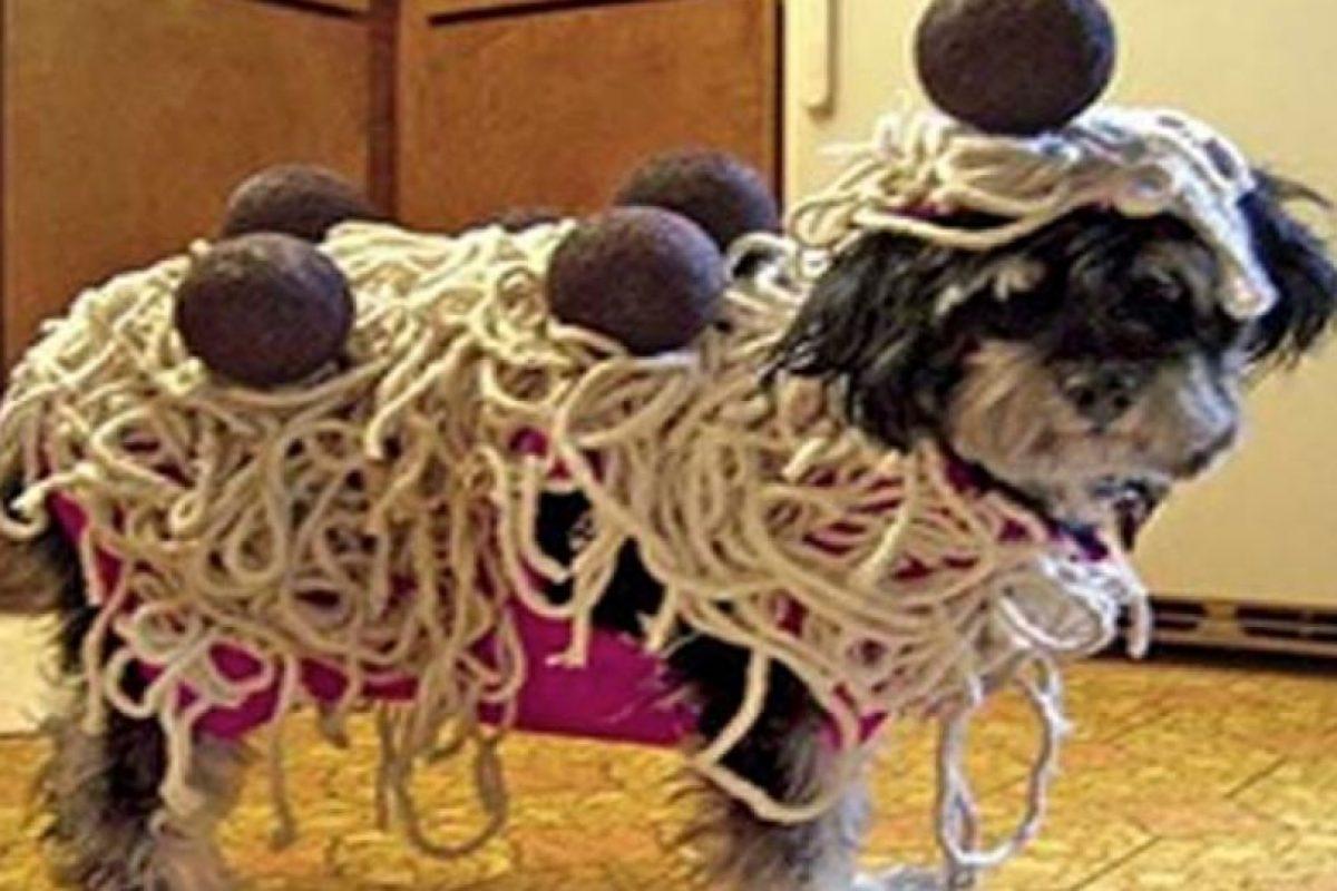Esta imagen podría resultar desconcertante… ¿disfrazarían a su mascota de spaghetti a la boloñesa? Foto:Tumblr.com/Tagged-costumes-pets. Imagen Por: