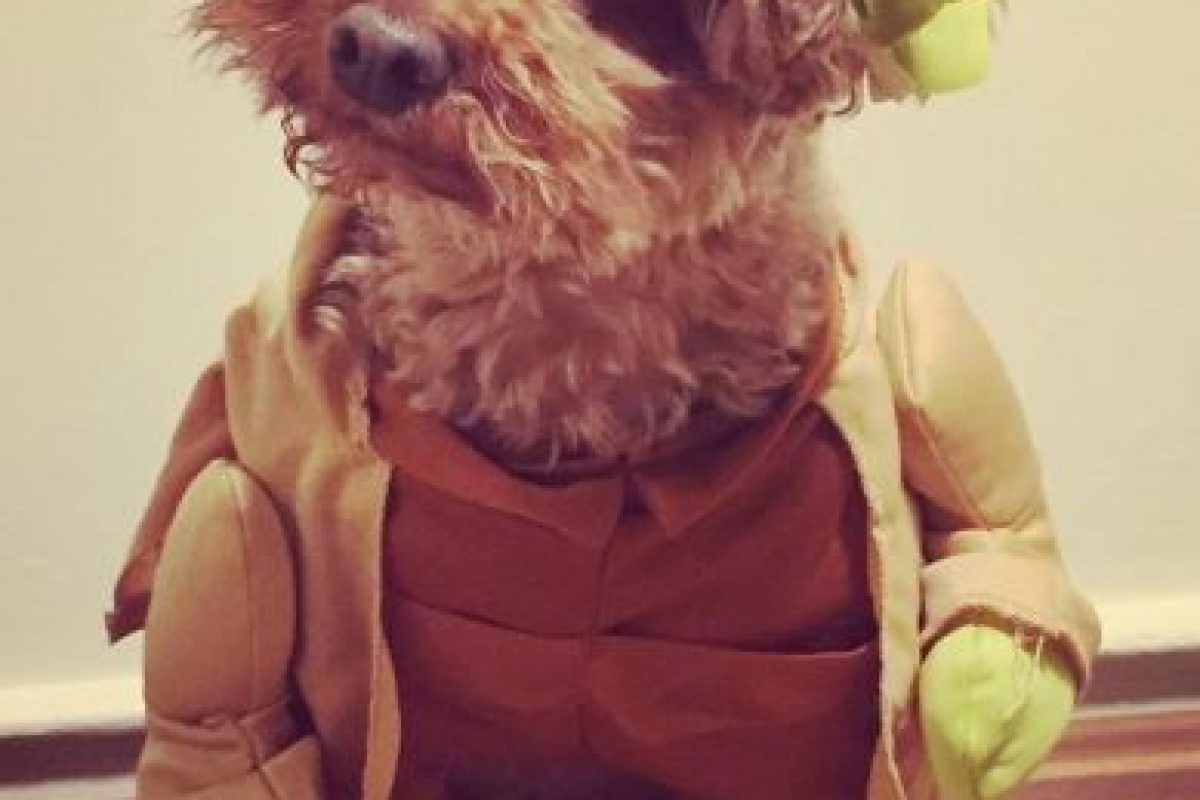 A Yoda no le gustó para nada ser Yoda. Foto:Vía Instagram. Imagen Por: