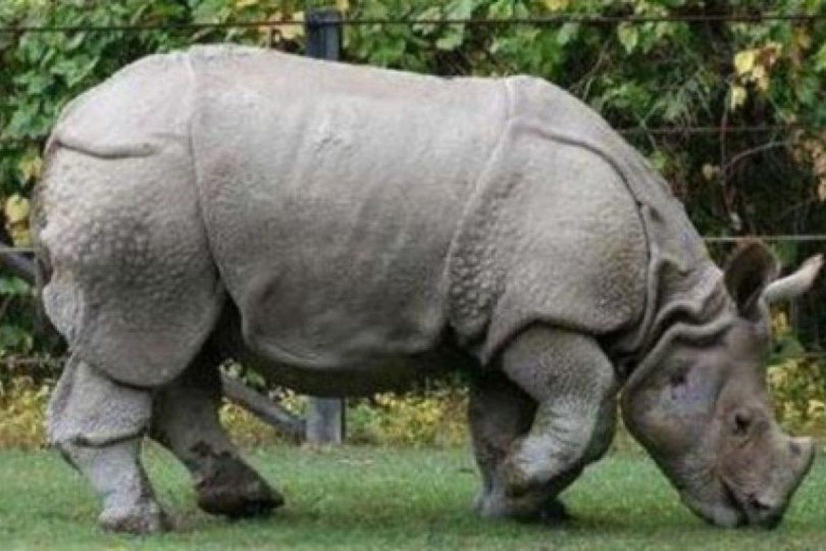 2010: Rinoceronte de Java (Rhinoceros sondaicus) Foto:Reproducción. Imagen Por: