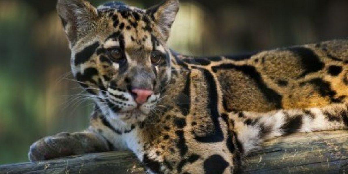 Conoce el animal que se extinguió justo el año que naciste