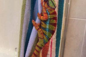 A continuación miren estos exóticos camaleones Foto:Vía Imgur. Imagen Por: