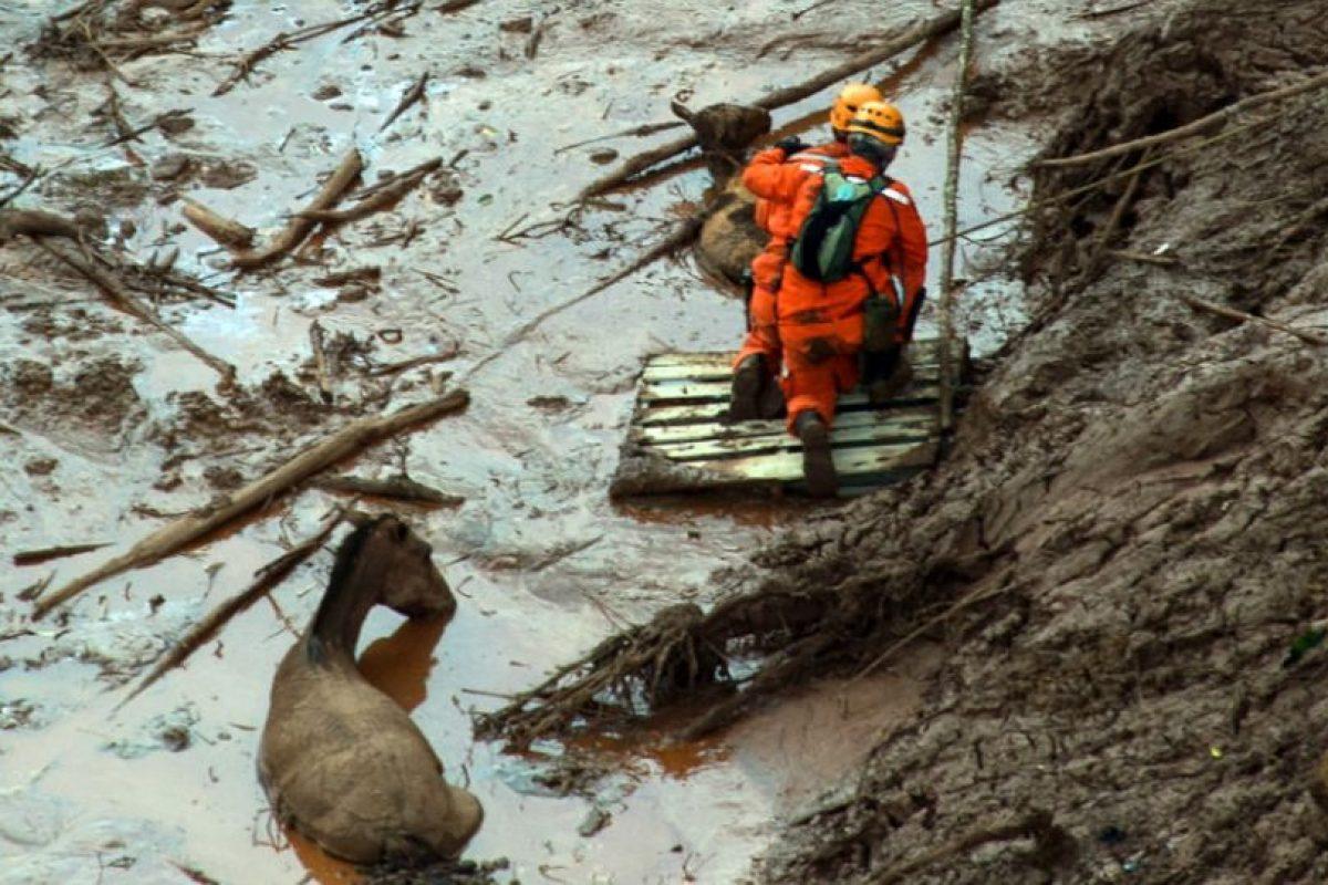 También se busca la manera de rescatar a los animales. Foto:AFP. Imagen Por: