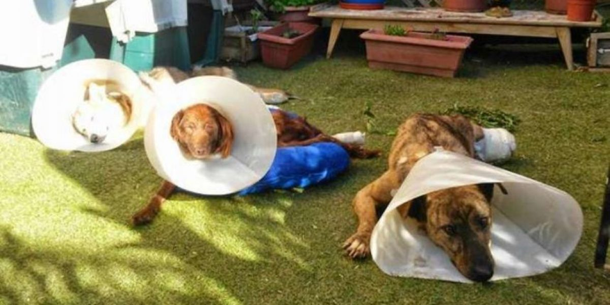 Valparaíso: ¿rechazarías a estos perritos discapacitados que necesitan tu ayuda?