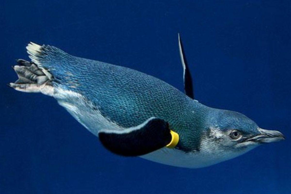 Los pingüinos que lograron salvarse ahora están en observación Foto:Vía zoo.org.au. Imagen Por: