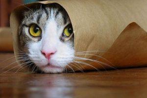 Estos gatos también pasaron por situaciones incómodas Foto:Pixabay. Imagen Por: