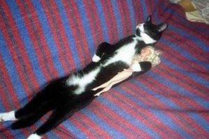 WTF! Foto:Vía Tumblr. Imagen Por: