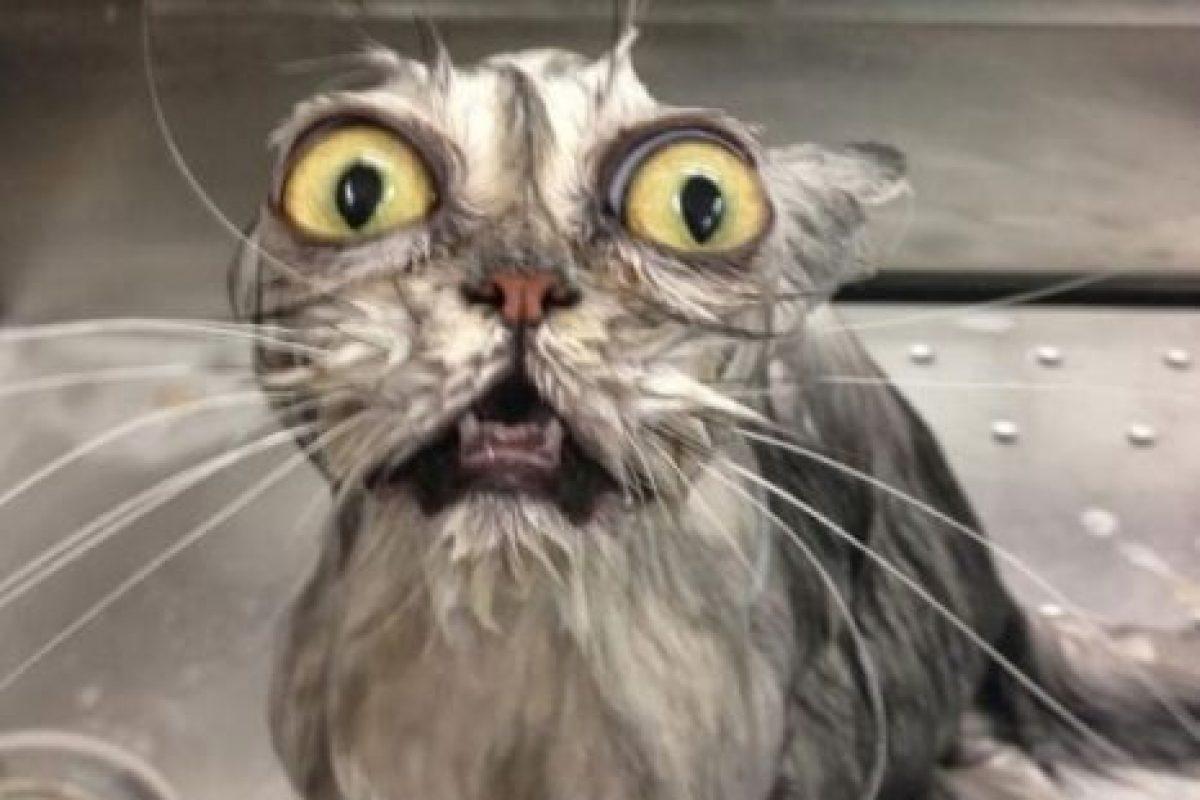 ¡Jabón no! Foto:Vía Youtube. Imagen Por: