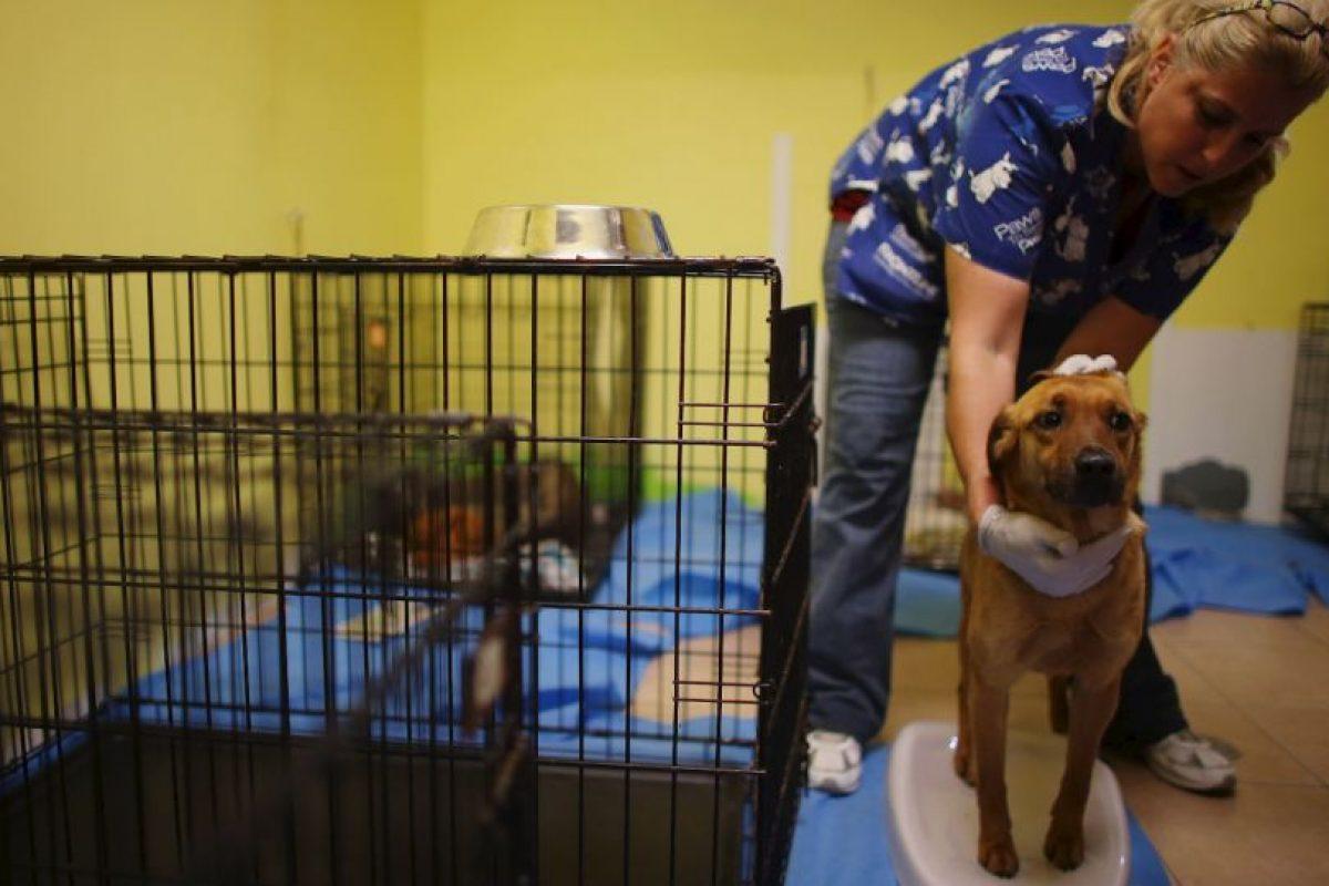 """""""Adoptar un animal es una gran decisión y una responsabilidad de más de 15 años en muchos casos"""", informa la organización AnimaNaturalis. Foto:Getty Images. Imagen Por:"""