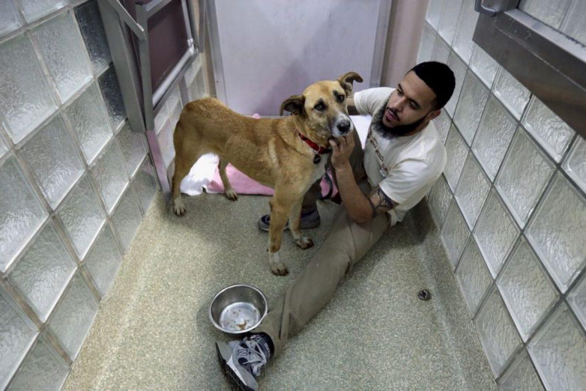 """""""Los perros y los gatos requieren mucho tiempo y dinero"""", explica la organización. Foto:Getty Images. Imagen Por:"""