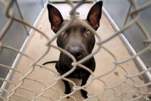 """""""Adoptar un perro o gato simplemente porque es lo que la gente 'hace' o porque los niños han estado llorando por un cachorro generalmente termina en un gran error"""", dice la organización de protección de animales. Foto:Getty Images. Imagen Por:"""