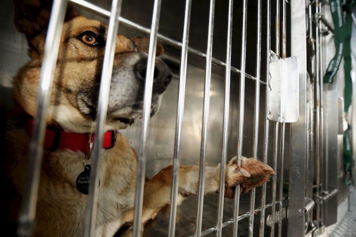 """""""Adoptar un perro o gato simplemente porque es lo que la gente """"hace"""" o porque los niños han estado lloriqueando por un cachorro generalmente termina en un gran error"""", dice la organización de protección de animales. Foto:Getty Images. Imagen Por:"""