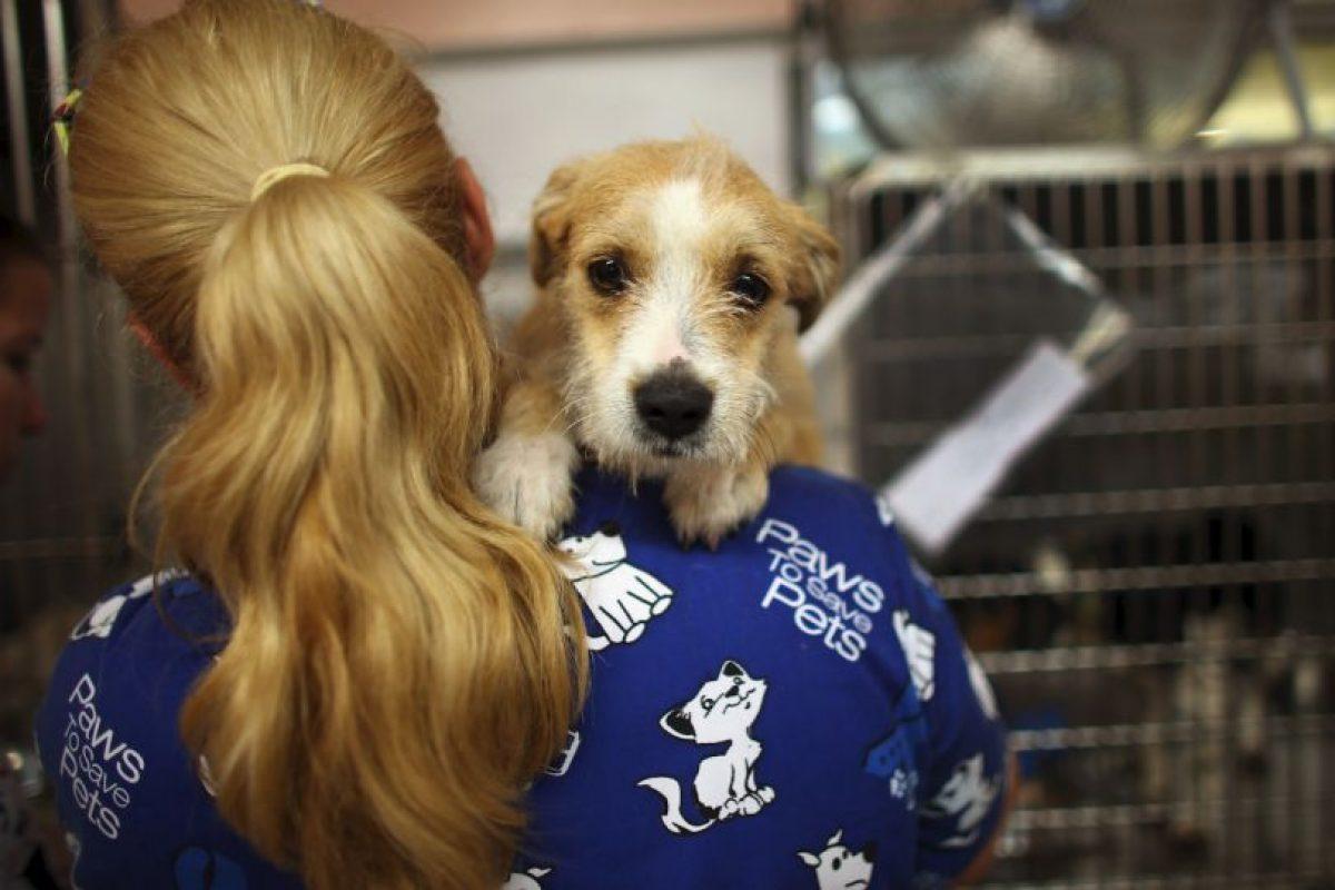 También recuerden que no en todos los edificios está permitido tener mascotas y algunos tienen restricciones. Foto:Getty Images. Imagen Por: