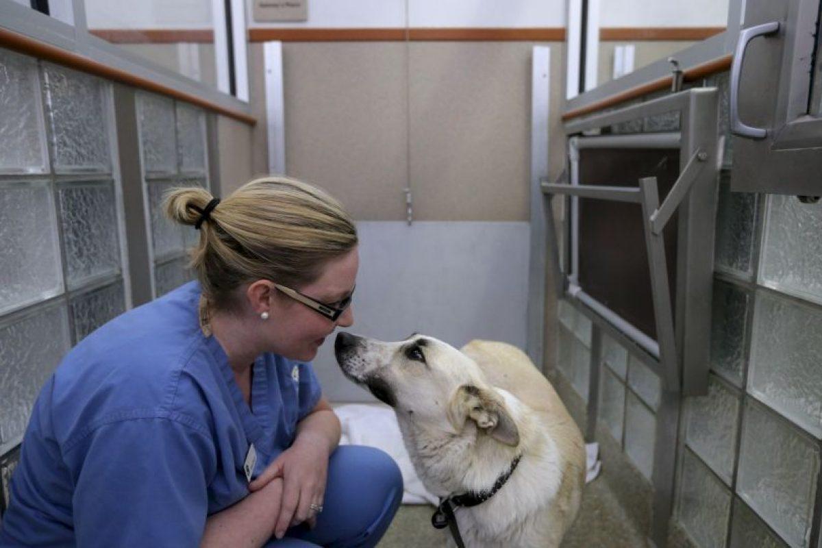 6. Alguien que los cuide en su ausencia. Foto:Getty Images. Imagen Por: