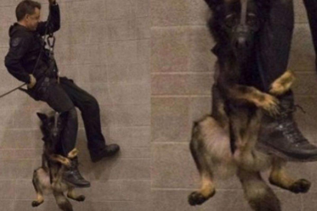 Este perro está rompiéndo la red de Facebook con esta foto. Foto:Facebook/Vancouver Police Department. Imagen Por: