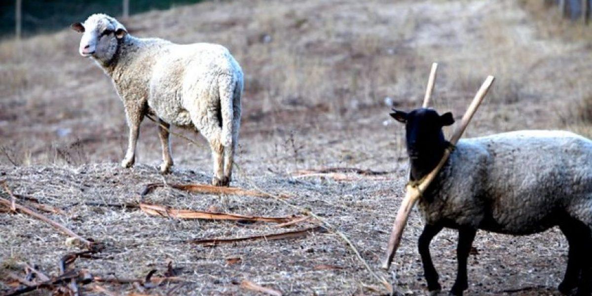 Megasequía, el nuevo fenómeno climático que impacta a Chile