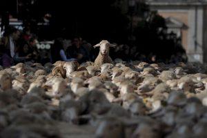 Es decir, la golosina que acaba con el mal aliento proviene del sudor de estos animales. Foto:Getty Images. Imagen Por:
