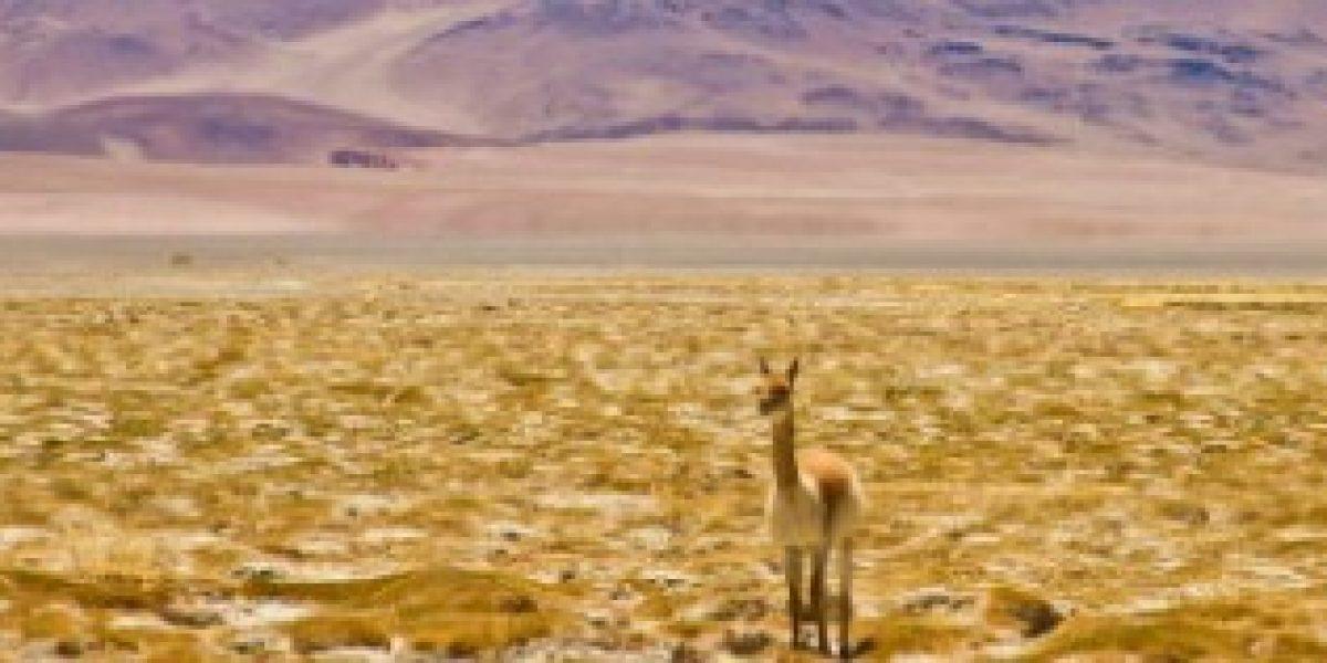 Salares chilenos están entre los más espectaculares del mundo