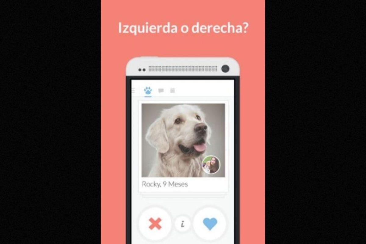 Tindog es la nueva forma de encontrar a esa persona especial, amante de los caninos. Foto:Holidog. Imagen Por: