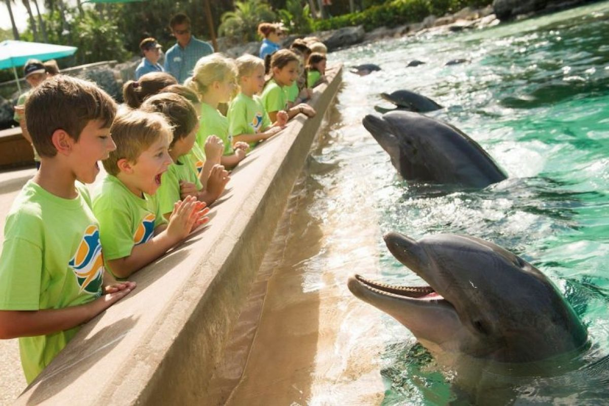 Foto:Vía facebook.com/SeaWorld. Imagen Por: