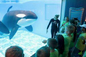 """En el documental """"Blackfish"""" se habla de aquellos entrenadores que han muerto debido a ataques de orcas. Foto:Vía facebook.com/SeaWorld. Imagen Por:"""