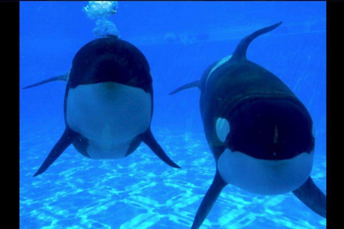 La mayoría de las ocasiones los parques acuáticos intentan ocultar estos acontecimientos. Foto:Vía facebook.com/SeaWorld. Imagen Por: