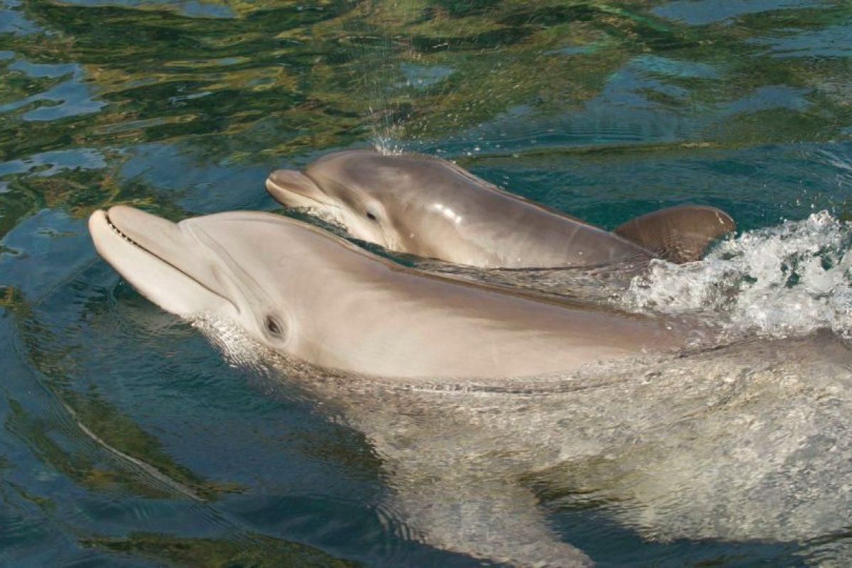 Las orcas no son los únicos animales marinos que forman parte de los espectáculos Foto:Vía facebook.com/SeaWorld. Imagen Por: