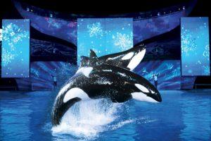 Estos animales pueden llegar a medir hasta siete metros (22 pies). Foto:Vía facebook.com/SeaWorld. Imagen Por: