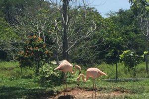 Foto:Vía haciendanapoles.com. Imagen Por: