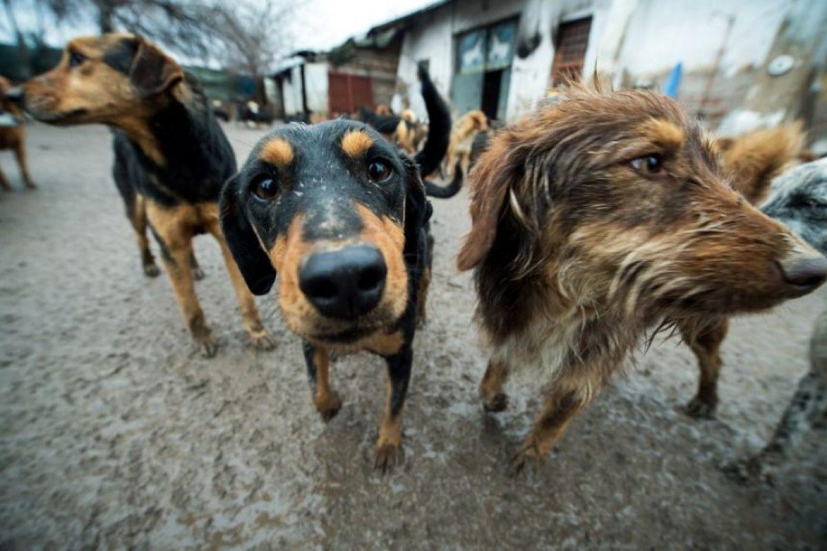 La segunda semana los perros llegan al lugar y se tratan de adaptar. Foto:AFP. Imagen Por: