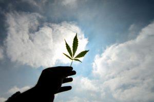"""2 a) """"Es decir, la ley chilena de drogas al tener una planta no existen penas de multa o presidio si se demuestra con pruebas que el consumo sólo personal y en privado Cannabis"""", añade Foto:Agencia Uno. Imagen Por:"""