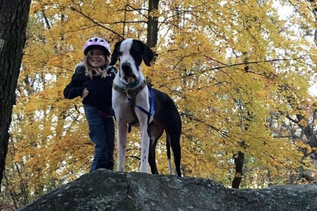 Ella necesitaba muletas para poder caminar, sin embargo, él las reemplazó. Foto:Vía Facebook/Bella and George. Imagen Por: