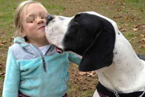 La historia de Bella y George fue compartida el 5 de noviembre en Facebook y ya lleva casi 39 millones de visitas hasta el momento. Foto:Vía Facebook/Bella and George. Imagen Por: